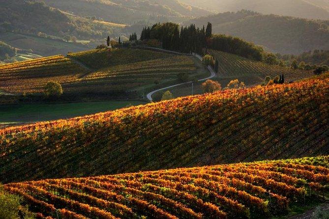 Tuscany Hiking Tour from Siena Including Wine Tasting, Siena, ITALIA