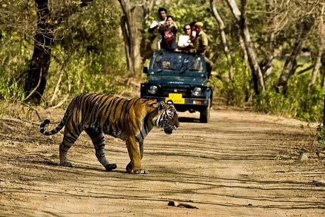 Golden Triangle with Ranthambore Wildlife Safari tour takes you to the most revered destinations of India - Delhi, Agra and Jaipur, and to the wilderness of Rajasthan at Ranthambore National Park. Your tour starts in Delhi, India's capital city, where enjoy a day riding on a cycle rickshaw through the streets of Old Delhi, get henna tattoo done, see interesting heritage monuments from the Mughal era. In Agra, behold at the spectacular beauty of the iconic monument of love - Taj Mahal, and Agra Fort, visit a marble factory and watch skilled craftsmen creating beautiful inlay and engraving designs on marble stone. Spend a day exploring the colourful and captivating city of Jaipur - the city of the Maharajas of Rajasthan. Learn how to tie a Rajasthani style turban, explore the magnificent Amber Fort and other palaces. Embark on a guided safari around the wild expanse of the Ranthambore National Park in Rajasthan, in search of Tigers.