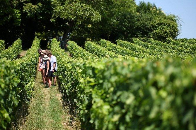 Pacote super econômico em Bordeaux: excursão Médoc para degustação de vinhos e almoço, além de St-Emilion ou Graves, Bordeaux, França