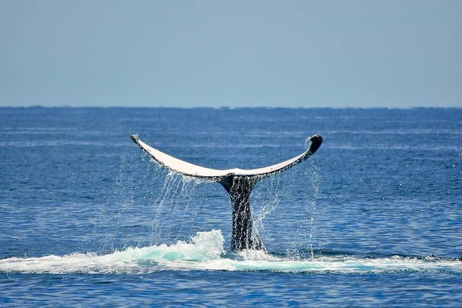 Whale Watching Busselton Departing from Busselton Jetty, Busselton, AUSTRALIA