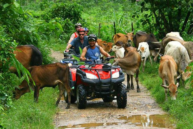 Start your engine and enjoy the most spectacular views and landscapes of Punta Cana. Travel the lush landscape of the Dominican Republic on a powerful ATV during this 4-hour eco-adventure. With the supervision of your local guide, drive your all-terrain through the forest until you reach an organic farm, stopping to taste the rich flavor of chocolate, coffee and Dominican organic rum. Meet a semi-dark natural cave with crystalline water underground. You will be surprised! Cool and tempting place to take a dip in this incredible natural beauty. Then head to Macao Beach to relax and enjoy the white sand and observe a unique landscape throughout the Punta Cana area. Round-trip transportation from the Punta Cana hotels is included.