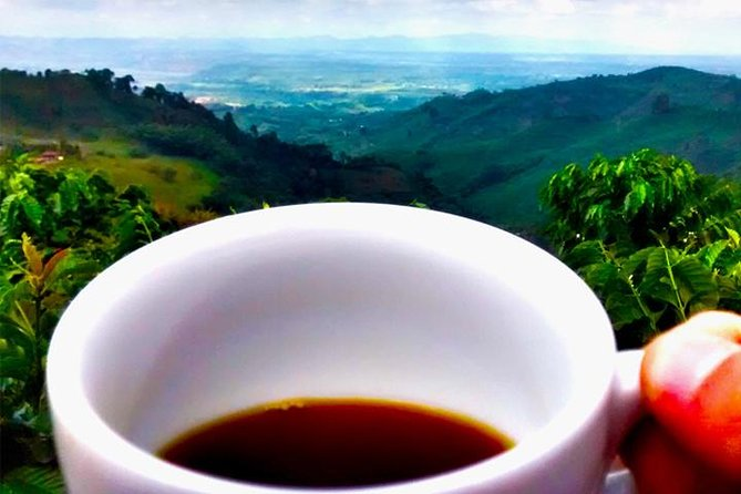 Enjoy the special characteristics of high quality Arabica coffee from Colombia, while on this private 8-hour tour. Accompanied by a local guide, you will be surrounded by an unforgettable view of the coffee-based landscape. Enjoy multiple cups along with a traditional lunch at a local restaurant.