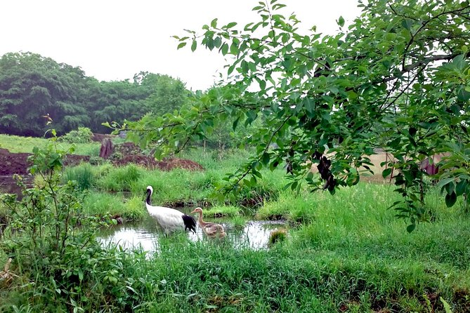 Join this unique nature tour to spend two hours with Japanese red-crowned cranes in their native habitat. In a small group of no more than 14, learn about how the cranes live and the impact human beings have upon their environment. Follow your guide to the best spots and enjoy the tranquility of Kushiro Marshland.