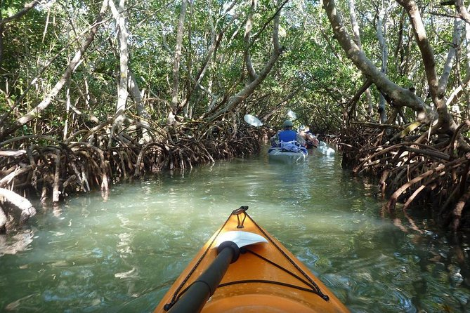 Now celebrating our 10th Year, Come along on one of Sarasota's most popular outdoor activities, a guided eco-tour by kayak, which introduces you to these Florida waters from a new perspective and gives you the chance to spot dolphins and other wildlife. Paddle through beautiful mangrove tunnels, bays, and estuaries with an adventurous guide, a professionally trained local with extensive knowledge of the Sarasota environment. With a mantra of 'no worries, have fun,' this tour is a relaxing and educational way to spend a morning or afternoon on the coast. Select a departure time when booking.