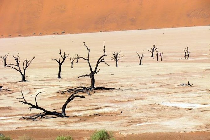 This 3-hour tour lets you explore abeautiful stretch of land known as Deadvlei and Sossusvlei byall-terrain vehicle. Visitors to Namib-Naukluft Park will appreciate the picturesque contrasts in the landscape, wherepitch-black trees, bleached-white clay pans, rust-red dunes, and deep-blue sky make for incredible images.