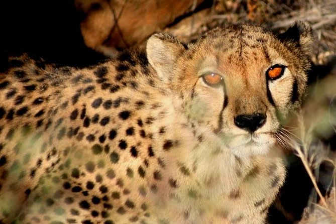 """See the top Namibian attractions on this accommodated guided tour: the Namib Desert, Solitaire, Sossusvlei (the 'Sea of Sand' UNESCO World Heritage), Namib-Naukluft Park, Dead Vlei, Swakopmund, Twyfelfontein Rock Engravings (UNESCO World Heritage), Damara """"Living Museum', Etosha National Park."""