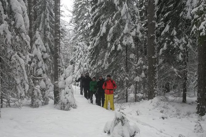A weekend in the forest on cross country skiing.