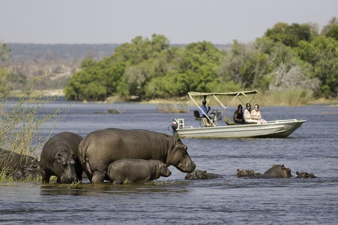 This tour departs early in the morning from your hotel either in Zambia or Zimbabwer to maximize the chances of encountering cats in both the Zambezi and Chobe National Parks. You will have a chance to witness sunset on the Chobe River, and may see big cats again in the Zambezi National Park as the tour does not leave the Botswana border until 7:00pm. Packed breakfast, lunch and refreshments are included.
