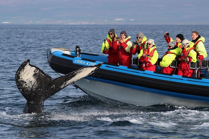 On the RIB speedboats you get:<br>-Less crowded boats<br>-More personal experience<br>-Higher chances of finding whales than on other boats<br>-Great respect to nature and minimum environmental impact<br>-Good memories and natural happiness<br>