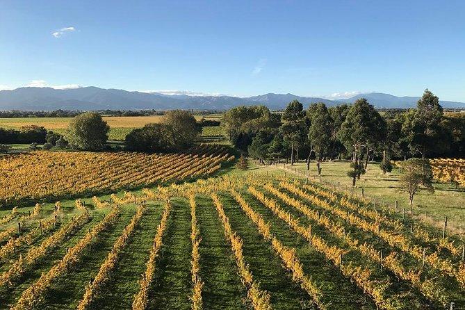 Winter Wine Gourmet and Scenic Pleasures of Marlborough: Group Tour, Blenheim, NUEVA ZELANDIA