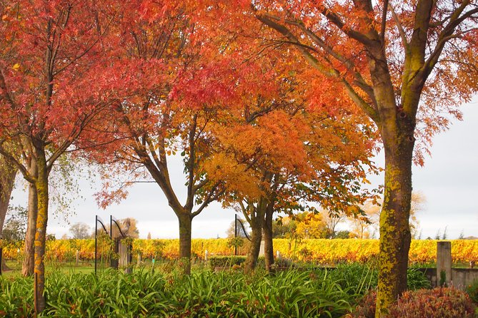 Private Tour: Winter Wine and Scenic Delights Tour from Blenheim, Blenheim, NUEVA ZELANDIA