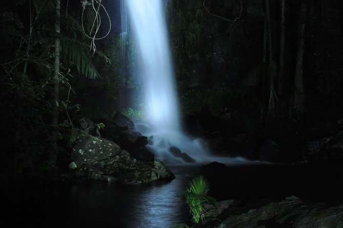 Leave the crowds behind and go stargazing and wildlife watching in Mt Tamborine National Park's eucalypt rainforest. Australia's only night-time rainforest and glow-worm tour by 4WD takes you into the rainforest searching for native flora and fauna by torchlight. Follow your guide on a nocturnal bushwalk to a magical waterfall lit by the twinkling glimmer of glow worms, and enjoy personalized attention on this must-do small-group tour.