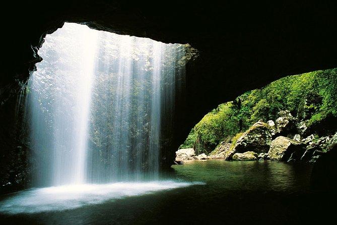 World Heritage Springbrook National Park Tour Including Natural Bridge, Surfers Paradise, AUSTRALIA