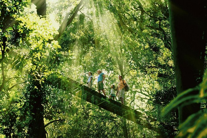Get off the beaten track and discover the rainforests of the Gold Coast Hinterland by 4WD. This full-day tour takes you to the volcanic plateau of Tamborine Mountain, and then onto Lamington National Park and the famous Treetop Walk at the family owned O'Reilly's Rainforest Retreat.