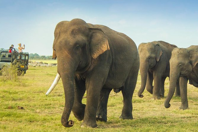 Private: Elephants, Animals & Bird watch Jeep Safari at Minneriya National Park, Batticaloa, SRI LANKA