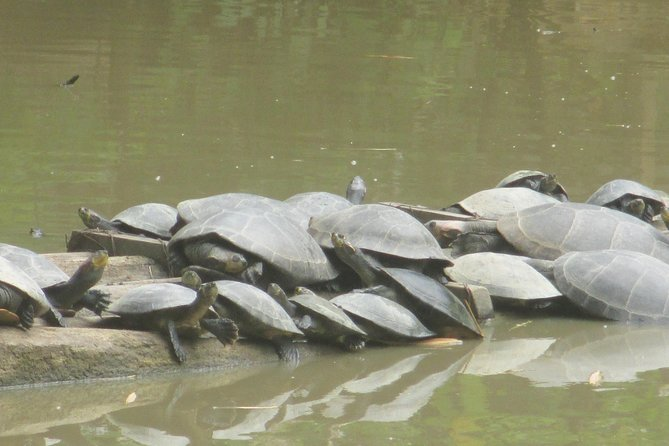 Recorrido de 4 días en el Amazonas en la Reserva Nacional de Pacaya Samiria desde Iquitos, Perú, Iquitos, PERU