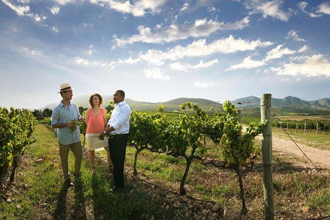 Excursão vinícola em Stellenbosch saindo da Cidade do Cabo, Cidade do Cabo, África do Sul