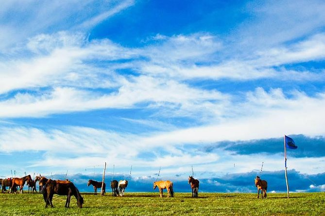 This is a gem-packed 8-day tour that allows you to explore popular attractions and experience Mongolian culture. Book this tour to create your very own unforgettable memories.