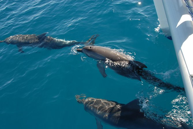 Enjoy this half-day dolphin watching tour from Hervey Bay allowing guests to see, experience and learn about the variety of wild dolphins that exist in the waters surrounding Hervey Bay, the Great Sandy Strait and Fraser Island. You'll also enjoy small passenger numbers, expert commentary and free Wi-Fi on-board. During the warmer months you'll have the chance to swim, go boom netting test your balance on the AquaMat or swim to the shore of Fraser Island. Morning tea is also provided.
