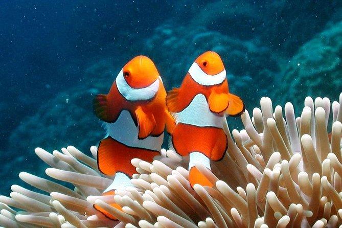 1-Day Try Scuba Diving Program in Ko Lipe, Ko Lipe, TAILANDIA