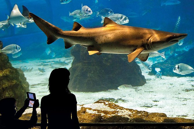In the city's old harbor, the Port Vell, Aquarium de Barcelona is the world's most important marine leisure and education center dedicated to Mediterranean undersea life.