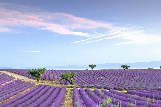 Dream of women Lavender fields and lunch in Provence, Cannes, FRANCIA