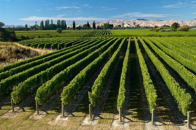 Explore New Zealand's premier wine region on this half-day tour from Picton or Blenheim. Visit four different wineries in the Marlborough wine region, stroll through the vineyards, and sample wines such as Sauvignon Blanc and Pinot Noir. This small-group tour is limited to 11 people and includes hotel pickup and drop-off.<br><br>NOTE: please do not book this tour if you are on a cruise ship which departs Picton at 6pm or earlier.