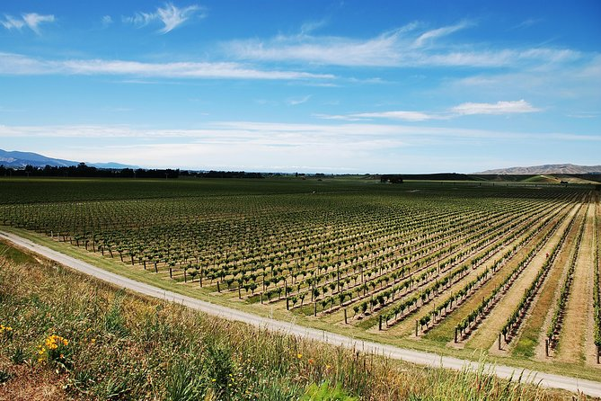 Half-Day Marlborough Wine Region Tour from Picton or Blenheim, Picton, NUEVA ZELANDIA