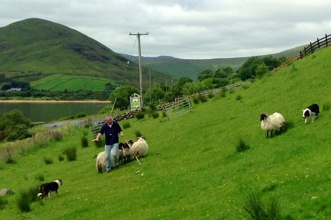 Successful sheep farmers need well-trained sheep dogs, and this 90-minute tour will show you how Border Collies are trained to work on a farm. Set in the stunning Connemara countryside, this farm is surrounded by rolling green hills that are backed by the Maumturk Mountains, and just minutes away from Lough Nafooey which boasts a freshwater beach. Depending on the season, you might have the chance to shear some sheep or cuddle with newborn puppies, and this tour is a truly authentic experience of life in western Ireland. Transportation is not provided to the farm to attend this experience; the distance is about an hour away from Galway city.