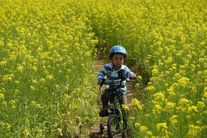 On this tour, spend a full-day (about 7 hours) getting in touch with both the nature and city daily life of Nagano while cycling with your English-speaking tour guide and small group.