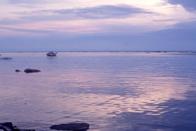 Arctic Ocean Adventure - Northbound, Fairbanks, AK, ESTADOS UNIDOS