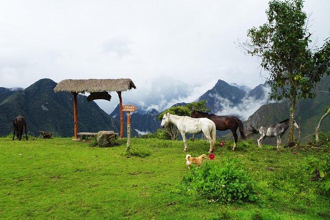 5-Day Salkantay Trail Trekking Tour from Cusco, Cusco, PERU
