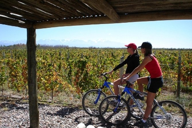 Bicicleta y cata de vinos con comida regional en la bodega Zuccardi (desde Mendoza), Mendoza, ARGENTINA