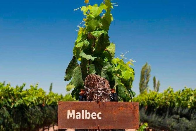 Be a WineMaker for a day in Mendoza, Mendoza, ARGENTINA