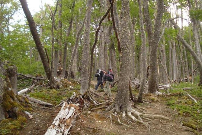 Trekking to Turquesa Lagoon & Carbajal Mount (Ushuaia), Ushuaia, ARGENTINA