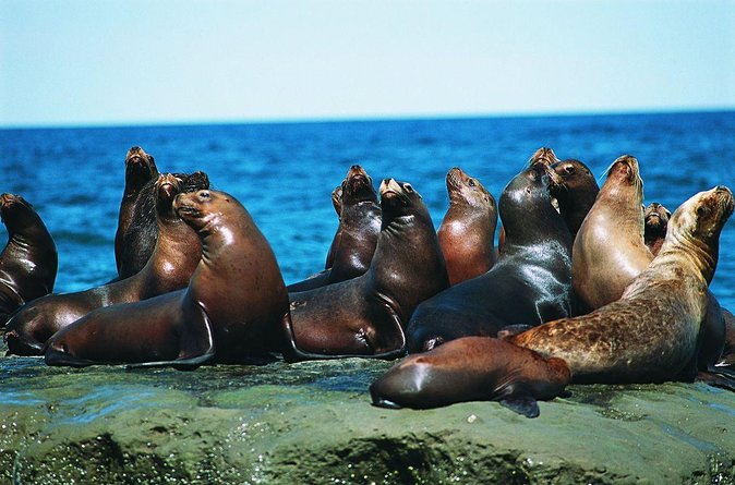 A visit to a sea lions colony located only 20 km from Puerto Madryn, where you can enjoy this sea life from a lookout point. It´s a half day activity