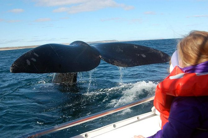 This navigation is cataloged as the one of greatest naturalistic enjoyment of Península Valdés, during the development of the same one we will learn about the biological cycle of the whales: mating, birth and breeding of the whale.