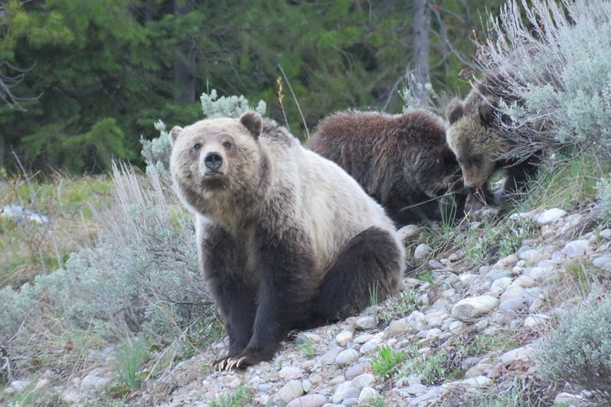 Enjoy 8-9 hours exploringGrand Teton National Park visiting some of its top attractions: see Jackson and Jenny lakes, have your camera ready to capture the stunning Oxbow Bend, and view the historic barns of Mormon Row. Throughout your journey, keep an eye out for the park's resident wildlife including grizzlies, bison, and pronghorn antelope. Your tour includesbreakfast, lunch, round-trip transport from Jackson hotels, a boat ride on Jenny Lake with a short hike to Hidden Falls(may 15-Sept 30) and the use of binoculars.
