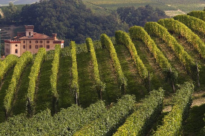 Among wine cellars and famous vineyards of Langhe and Roero, come and taste the most famous Piedmontese wines: Barolo, Barbaresco, Nebbiolo, Roero, Barbera, Dolcetto and Arneis.