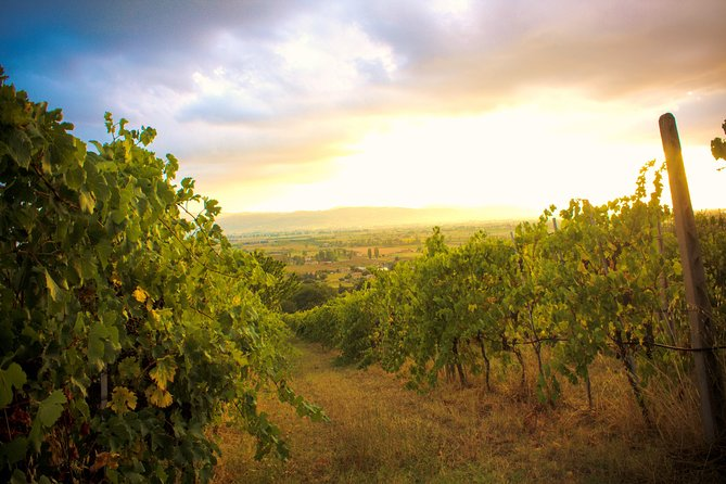 Winemaker for a Day: Tour an Organic Winery, Assisi, ITALIA