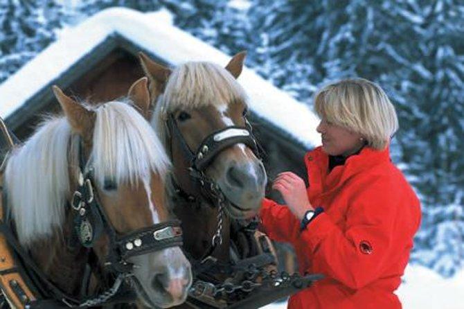 Private Horse-Drawn Sleigh Ride from Salzburg, Salzburgo, AUSTRIA