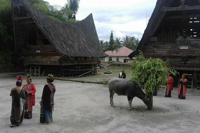 6 Day North Sumatra Highlights - Jungles, Orangutans, Lakes and Volcanoes <br><br>Bukit Lawang - Lake Toba - Berestagi<br><br>Highlights - 3 hour orangutan jungle trek - wildlife spotting - Sipiso Sipiso waterfall - Lake Toba Samosir Island - Batak king's residence - stone chairs - Berestagi volcanoes - Fruit and Flower markets - Buddhist Temple - Gundaling lookout - hot spring baths