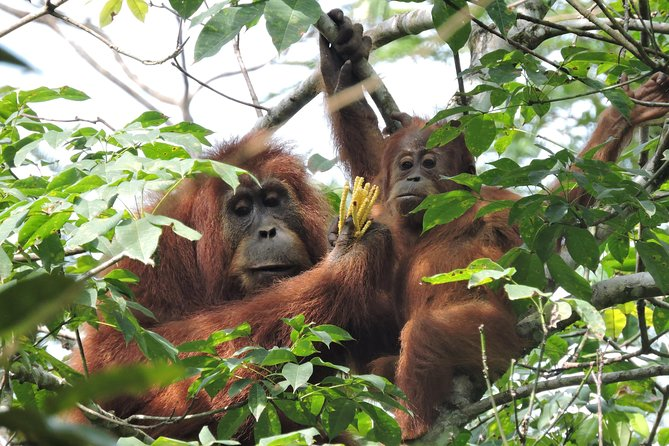 4 Day Jungle Adventure including 2 day trek <br><br>Bukit Lawang - Batu Kapal - Gunung Leuser National Park<br><br>Highlights - overnight orangutan jungle trek - wildlife spotting