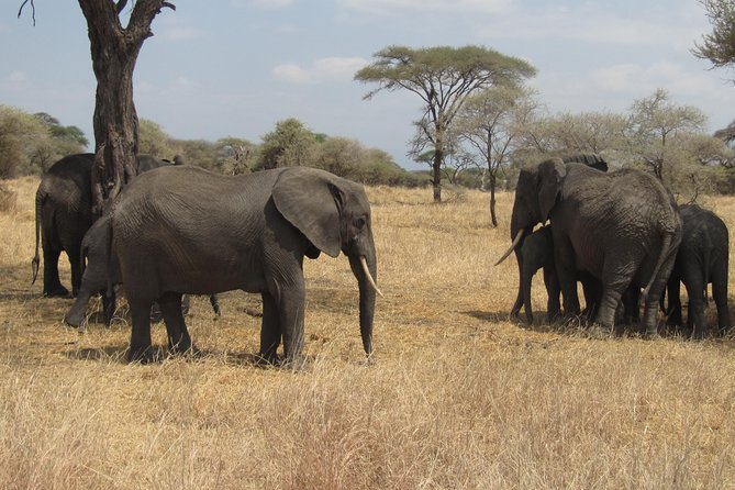 Tarangire National Park: Guided Day Tour from Arusha, Arusha, Tanzânia