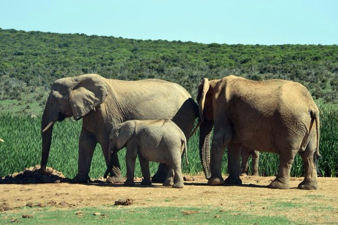 This 3-day Safari tour offers the traveler the unique opportunity to experience the best of the Cape Peninsula along with searching for the Big 5 on Safari. See other animals such as crocodiles, cheetahs and explore the Cango Caves! What an incredible adventure!