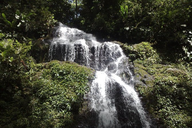 During this tour, you can expect quite the variation in the types of flora and fauna, such as small palm trees and meter-tall trees filled with orchids, but also various animals like colorful birds, snakes, monkeys, frogs and pigs. The greatest treasures of the Brown Mountain are the different natural waterfalls on the mountain, where you can take a shower.<br><br>The route from Paramaribo to Brownsberg is approximately 110 kilometers. During the trip we pass through various local villages, where mostly Maroons live. The road to the top of Brownsberg will be climbed with a pickup or van. Once we once arrive at the top, we wait for a beautiful view over the lake.<br><br>In the evening you will be able to enjoy a boat ride, swim, or fish for toekoenari (bass species) and piranhas . If you want to do something a  little quieter, you can relax in the hammock. This tour is highly-recommended for nature lovers.