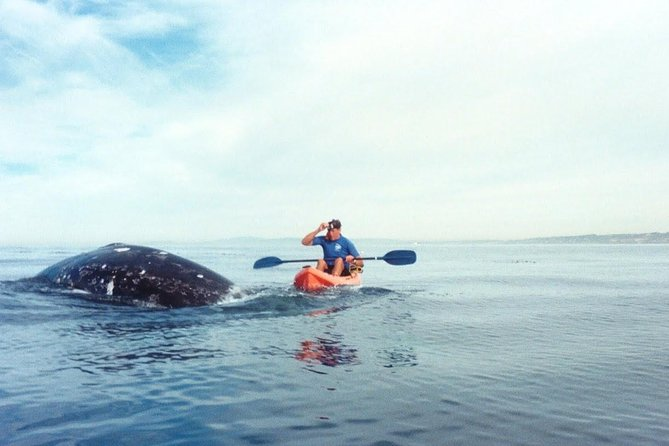 Kayak out from La Jolla Shores and watch the magnificent whales as they migrate between Alaska and Baja, Mexico.