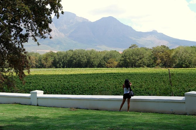 Explore the fantastic wine regions of Paarl, Franschoek, and Stellenbosch on this 8 and a half hour  tour. Visit four top vineyards to learn about South African wines. Enjoy a delicious lunch and wine tastings amidst the beautiful rolling mountains of the region. As it is a very full day in the beautiful  winelands, there will be no time for walking around in the cities.