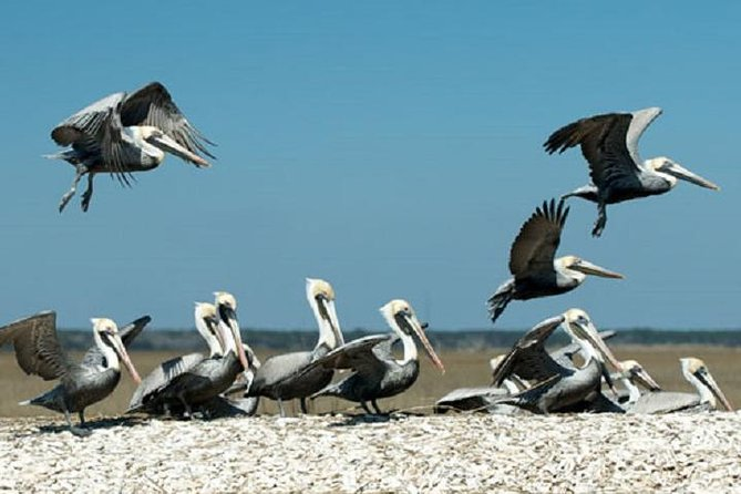 2-Hour Nature Boat Tour with Certified Naturalist, Charleston, SC, ESTADOS UNIDOS