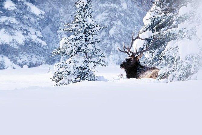 MÁS FOTOS, Winter Wildlife Discovery Tour